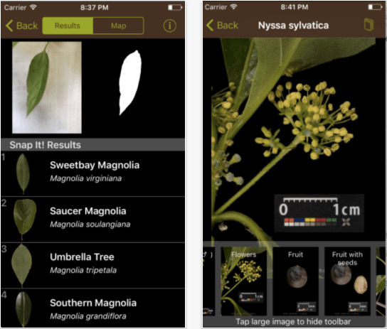 Leafsnap app to identify plants and leaves
