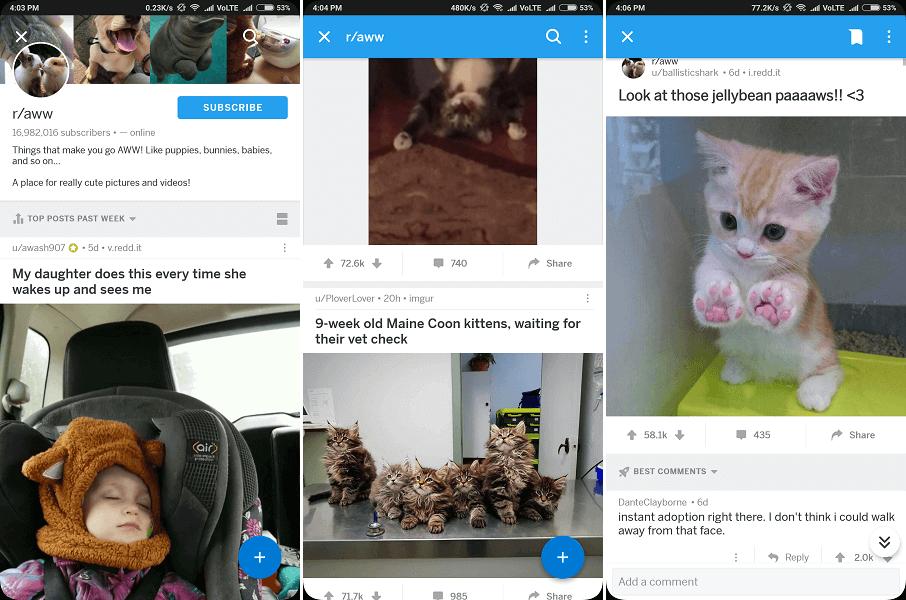 Top subreddit for cute pics - aww