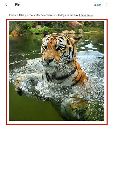 Google Photos Bin Folder Showing Deleted Screenshot